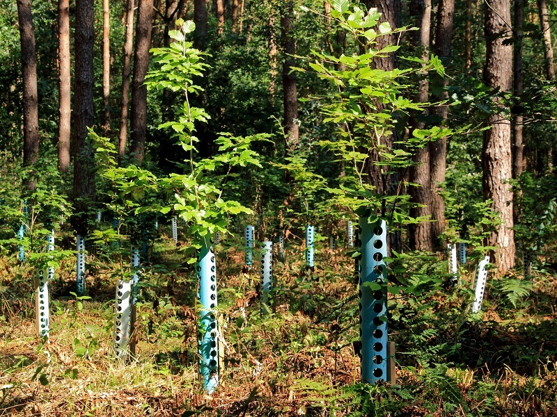 Reforest an area the size of the US to help avert climate breakdown