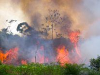 Out-of-control Amazon fires have surged since 2018