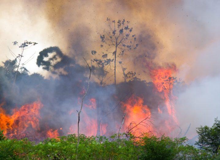 Ground shot of the Amazon rainforest burning.