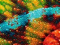Nanomachines used to power fast-acting 'chameleon skin' camouflage