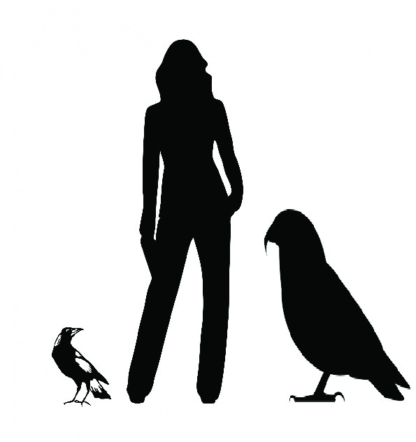 Silhouettes of a magpie, person and giant, ancient parrot.
