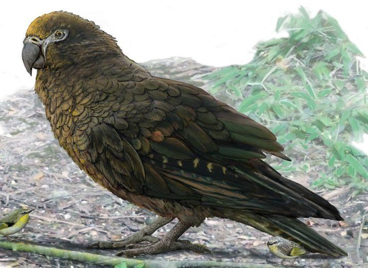 Reconstruction of the giant parrot Heracles. Image: Dr Brian Choo/Flinders University/PA