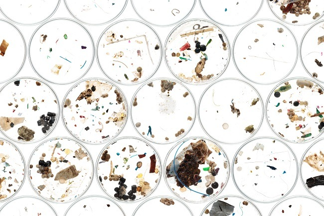 Number of petri dishes with collected microplastics collected in them.