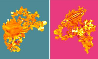 Two examples of the gold nanosheets with backgrounds coloured turquoise and pink.
