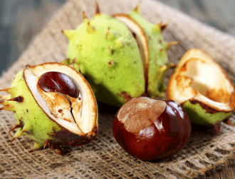 Conker trees among two-fifths of European trees at risk of extinction