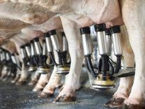 AI milking tech named best in show at Ploughing Championships pre-event
