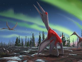 'Cool discovery' reveals flying reptile that dwarfed most things in the sky