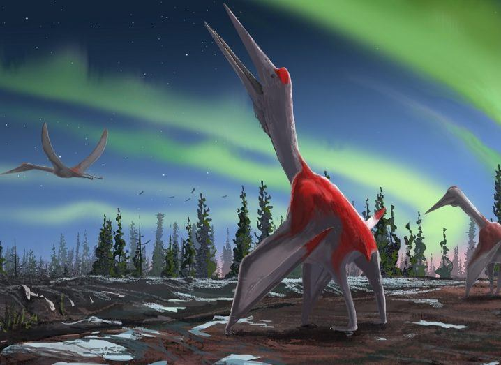 Scientists identify largest flying animal in history