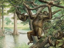 Rare 10m-year-old fossil discovery potentially rewrites human evolution