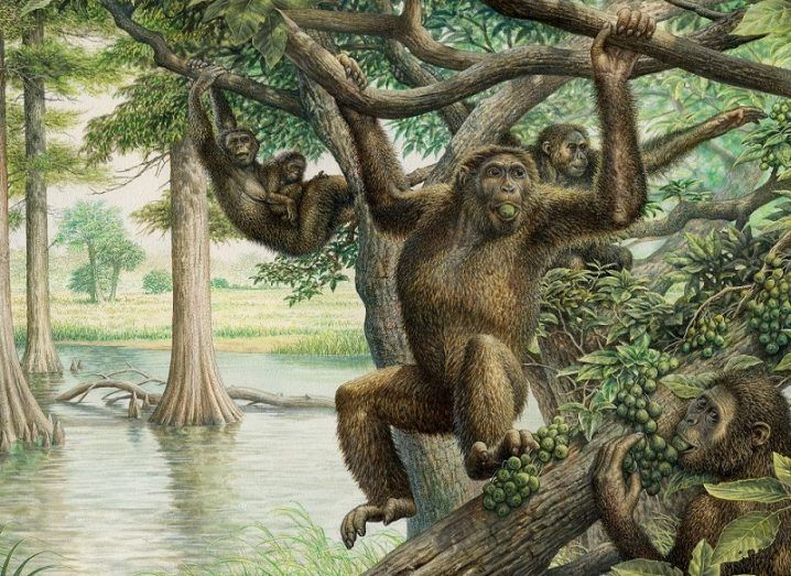 Illustration of Rudapithecus hanging from a tree with other apes beside a river.