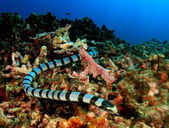 Sea snake discovered to have strange ability to breathe through its head