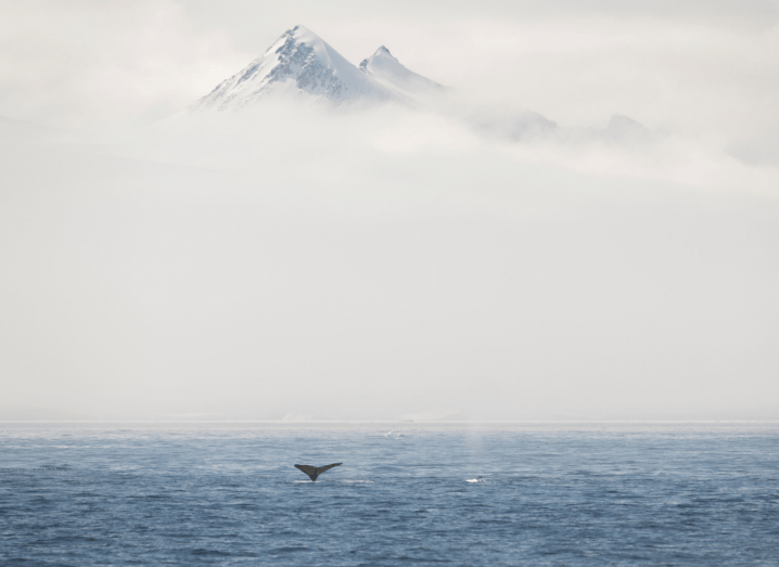 A whale's tail sticking out of a body of water in front of a mountain surrounded by mist.