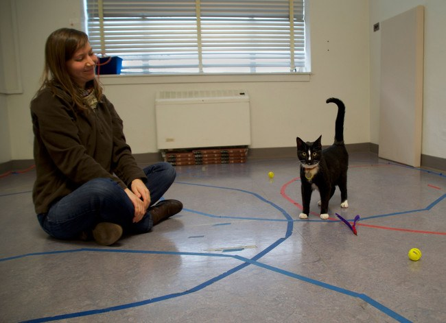 A woman sits cross-legged on a floor and a cat stands nearby looking alert with its tail pointing upward.