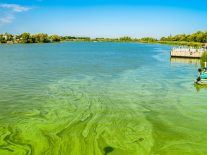 Severe algal blooms in freshwater lakes are spreading across the globe