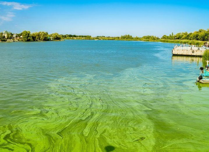 A lake with green algal bloom against a sunny sky backdrop.