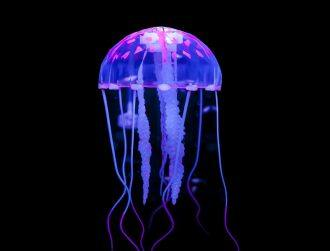 Discovery sheds light on jellyfish's limb-growing superpower