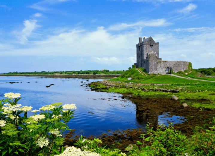 A grey castle in front of a body of water. At the foreground of the photo there are flowers. In the sky above there are a few clouds.