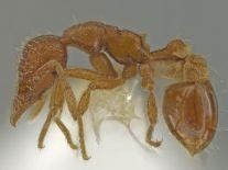 Ant expert surprised to discover new species in his own backyard