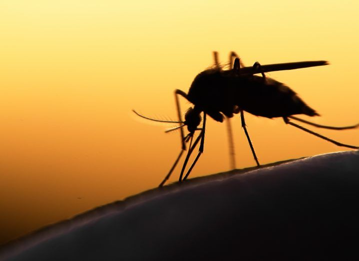 A mosquito on human skin against a sunset background.