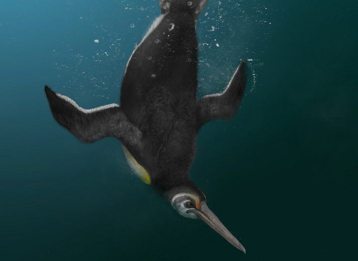 Illustration of the ancient penguin diving down into the ocean.