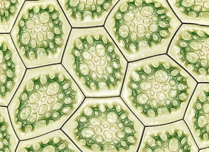 Close-up of the cellular structure of a leaf.
