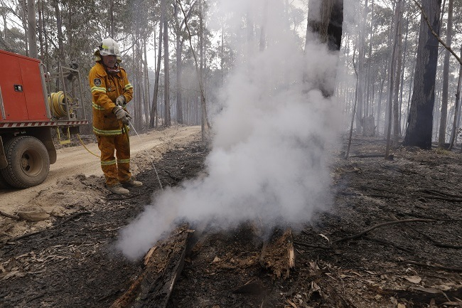Australian firefighter spraying water on a smoking log in a devastated forest.