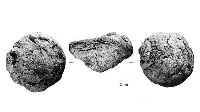 Scans of the ancient plant segments against a white background.