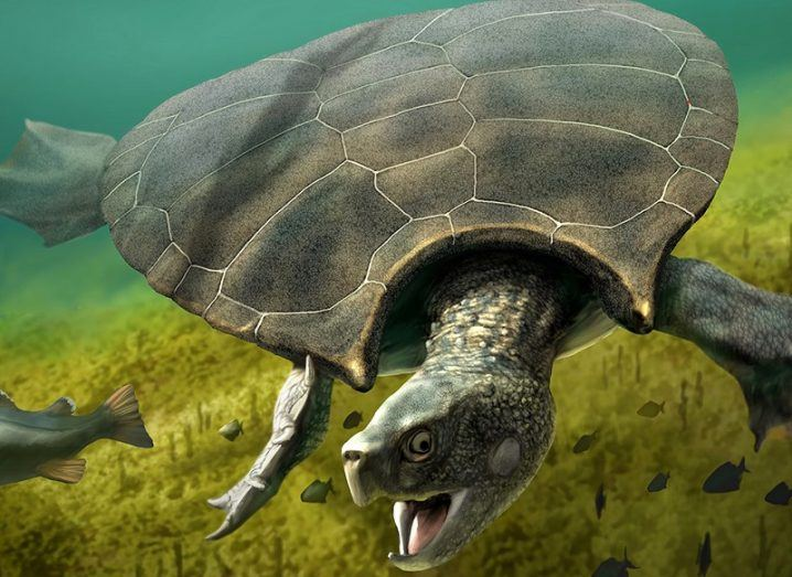 Scientists dug up car-sized turtle fossil