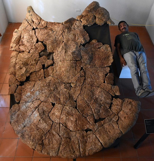 Rodolfo Sánchez lying beside and dwarfed in size by a fossilised shell of the giant turtle.