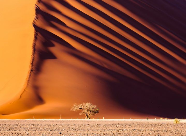 Massive orange dune towering over a small tree in a barren landscape.