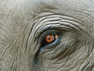 Elephants seen mourning dead loved ones long after they've gone