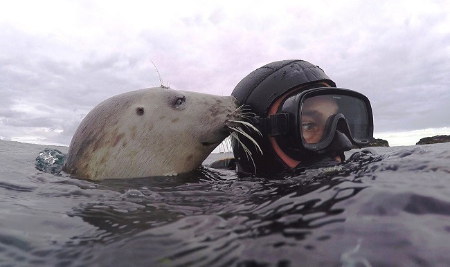 Ben Burville with his head above the water in scuba gear with a grey seal head touching him.