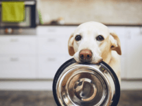 Users claim that pets were left unfed due to Petnet outage