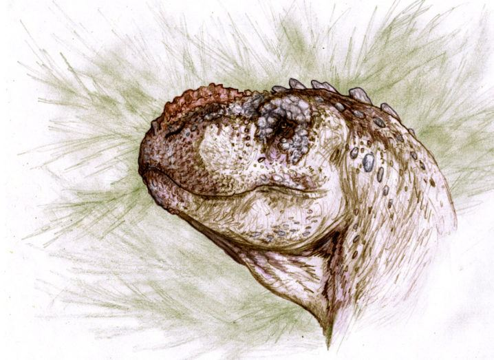 Drawing of the head of the Tralkasaurus against a green and white background.