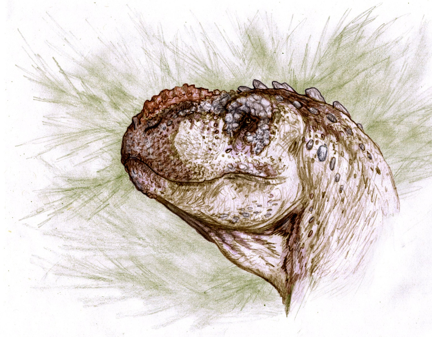 Distant T-rex relative named 'thunder reptile' discovered in Argentina