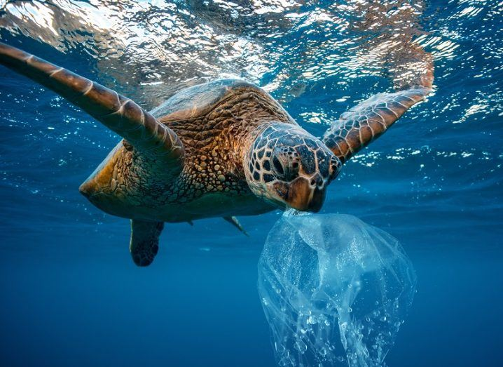 Turtle with a plastic bag in its mouth in the ocean.
