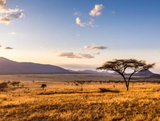 Trees spreading across the savannah could have dramatic impact on Earth