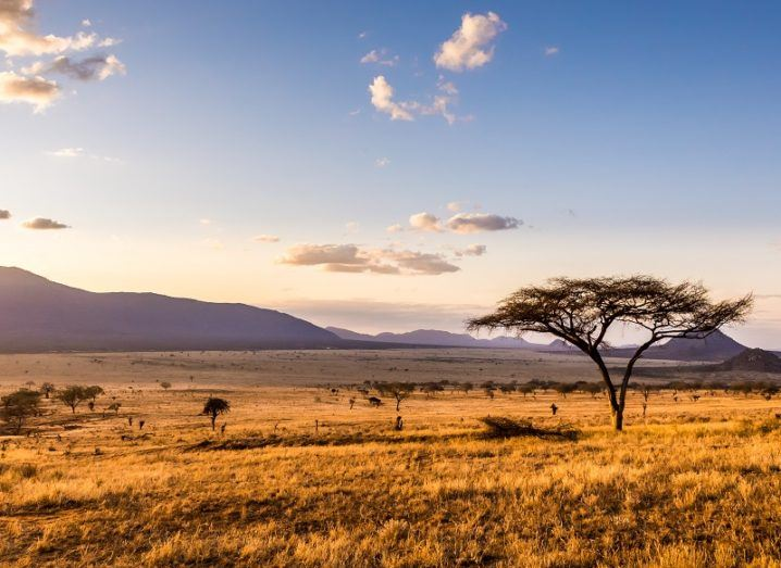 Sunset over the savannah in Kenya with trees dotted across the landscape.