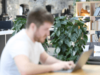 What type of candidates is Zalando looking for at its Dublin hub?