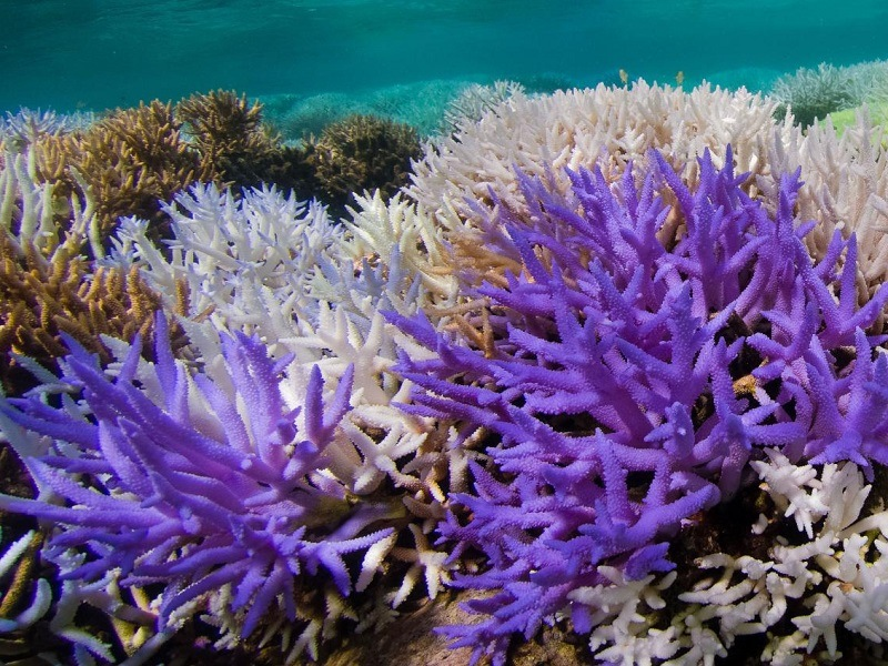 Mysterious neon coral may be releasing its own 'sunscreen'