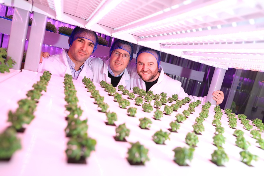 Image of three men in lab coats and hair nets standing beside crops being grown in a vertical farming set-up.