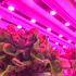 Farmony joins Sananbio to expand vertical farming in Europe