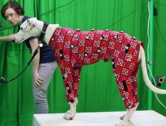 Dog actors for video games no longer need to wear bulky motion capture suits