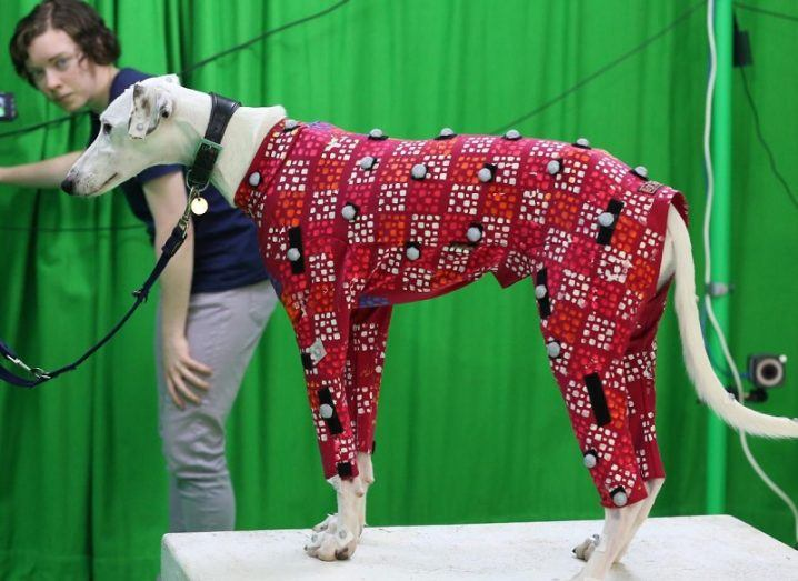 White dog on a plinth wearing a red motion capture suit against a green screen background.