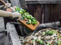 Research into food waste and plastics backed by €4m in SFI funding