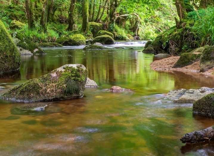 A stream in the Wicklow Mountains surrounded by lush greenery.