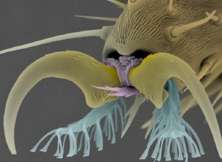 Electron micrograph of the fly foot.