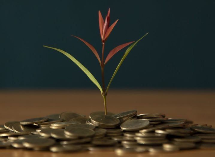 Concept of a plant growing out from a pile of coins on a wooden table.