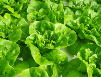 iFarm's indoor farming solution raises $4m