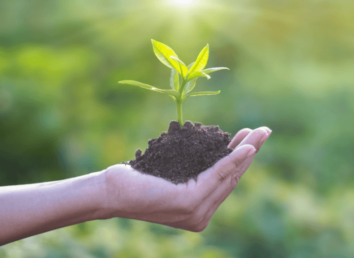 A hand holding soil and a plant in front of a green background.